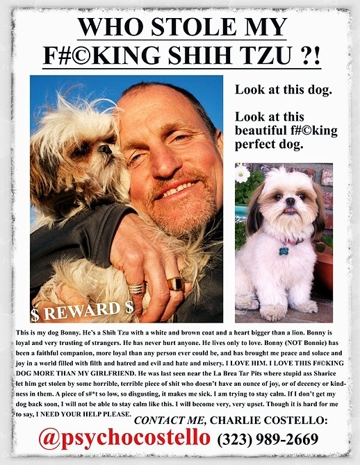 Who Stole My Shih Tzu?